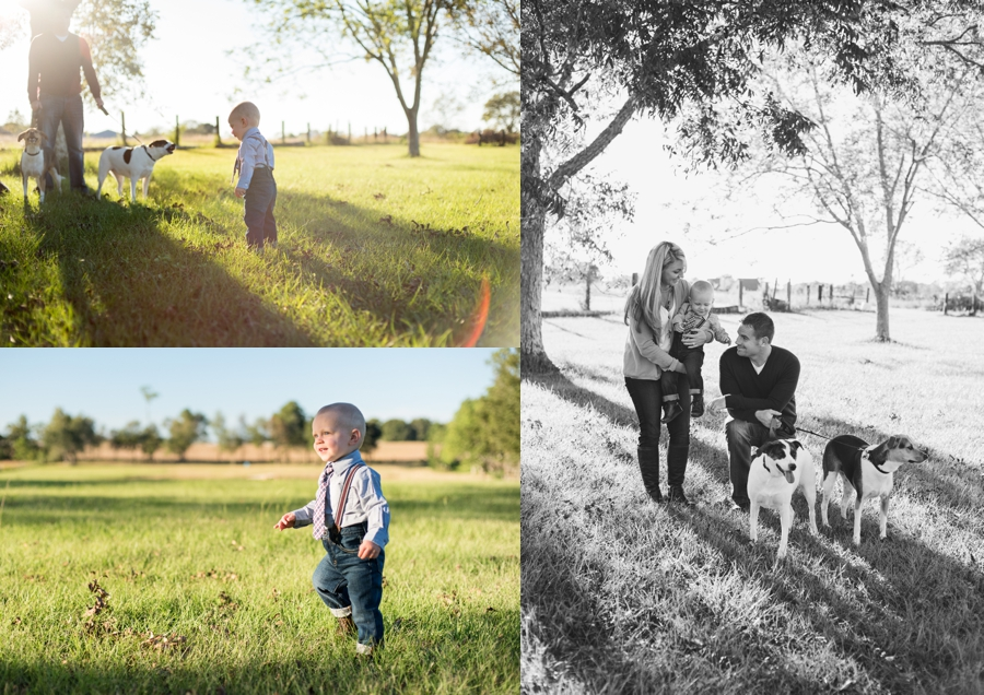 family session field florida fall puppy furbaby christmas sunset_0001