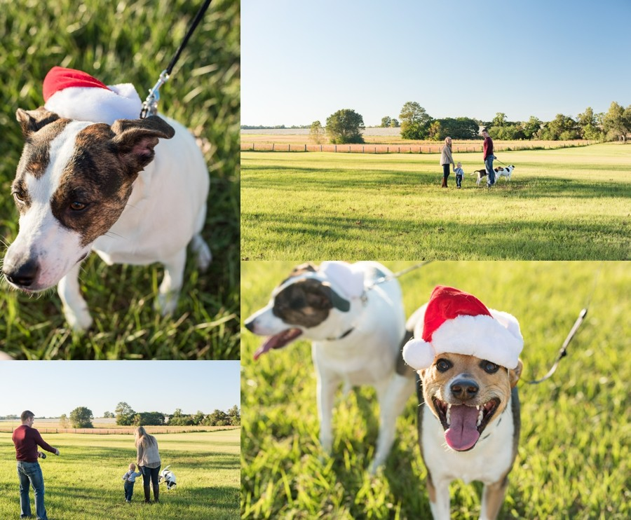 family session field florida fall puppy furbaby christmas sunset_0003